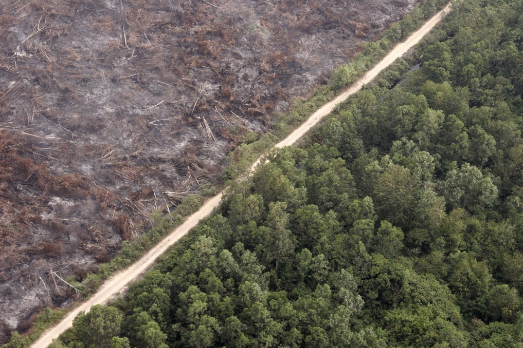 Indonesia's environmental issues - deforestation by internet