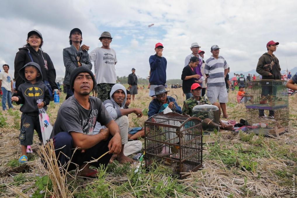 Indonesien-Bali-Büffelrennen-2
