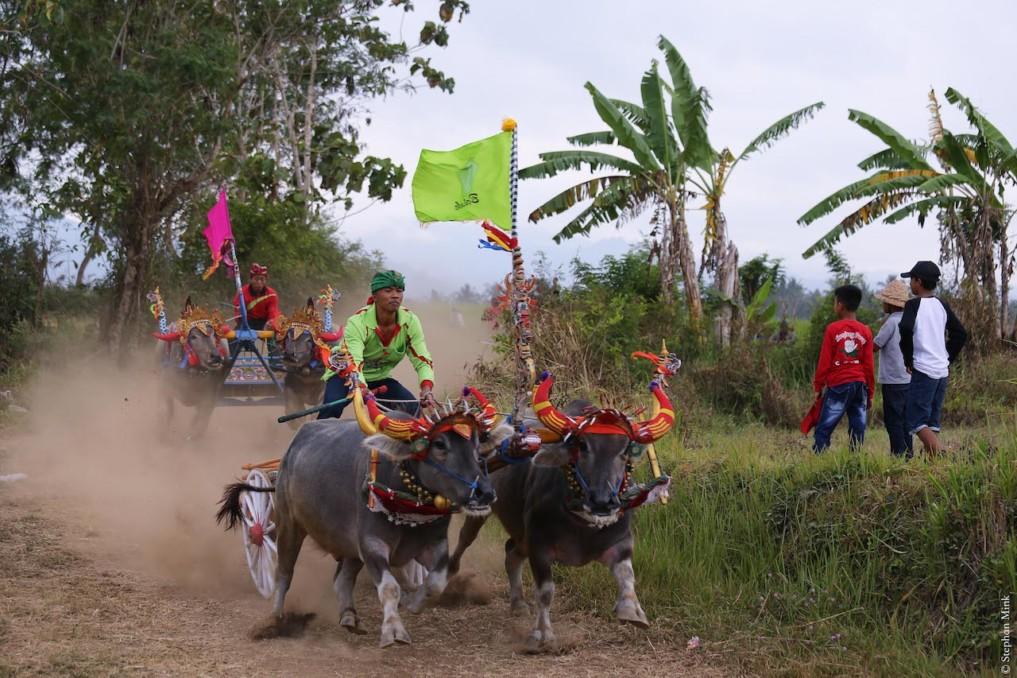 Indonesien-Bueffelrennen-Bali-5