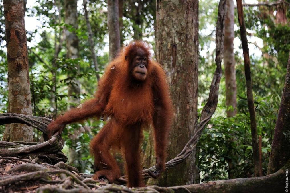 Indonesien-Bukit-Lawang-3