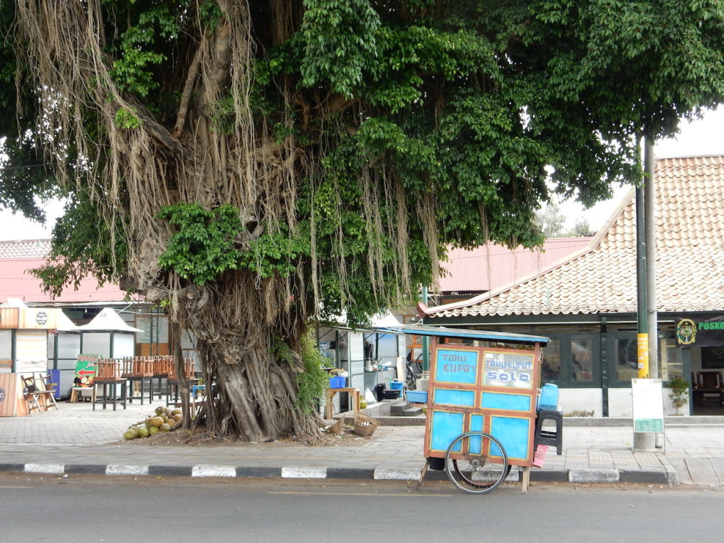 Indonesien-Highlights-Banyan-Tree-Bali