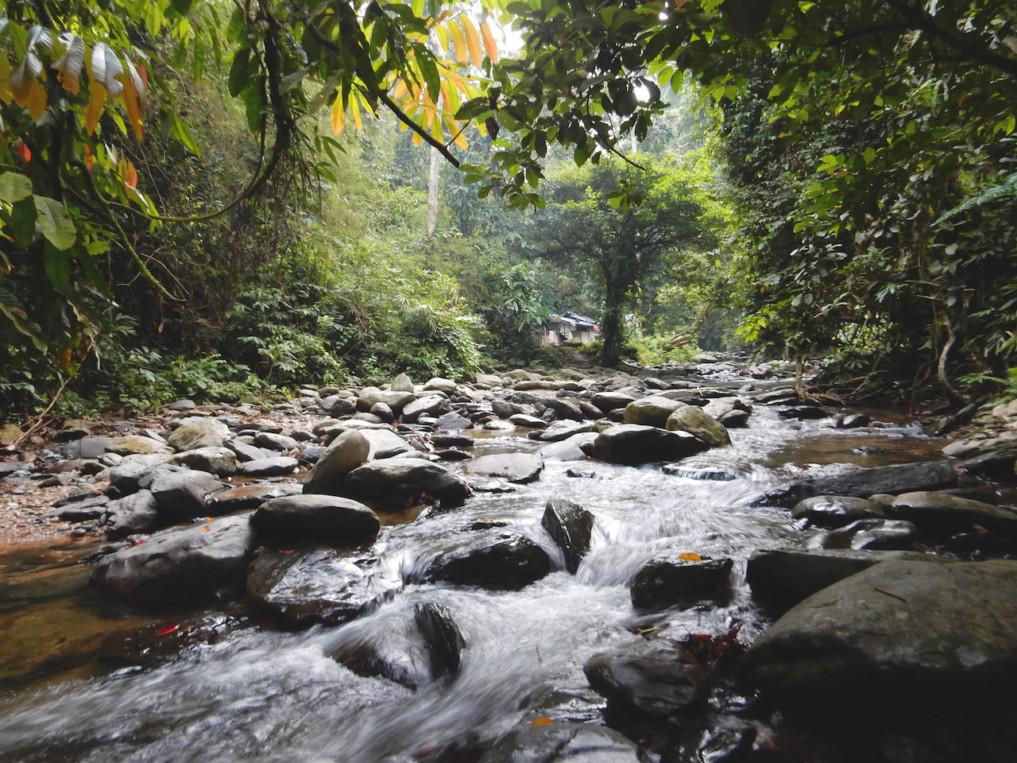 Indonesien-Highlights-Bukit-Lawang-2