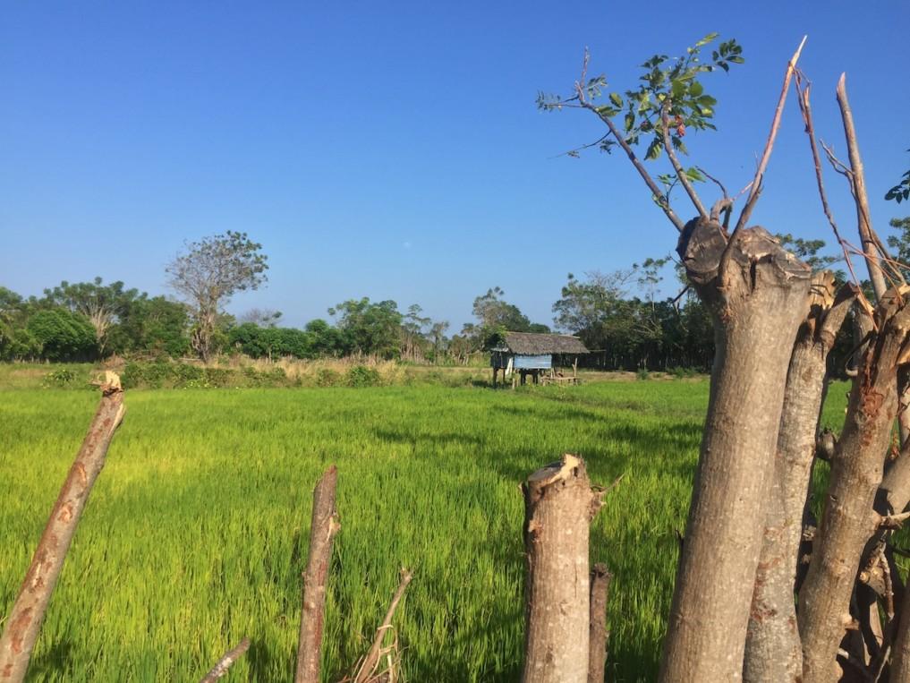 Indonesien-Highlights-Reisfelder-2