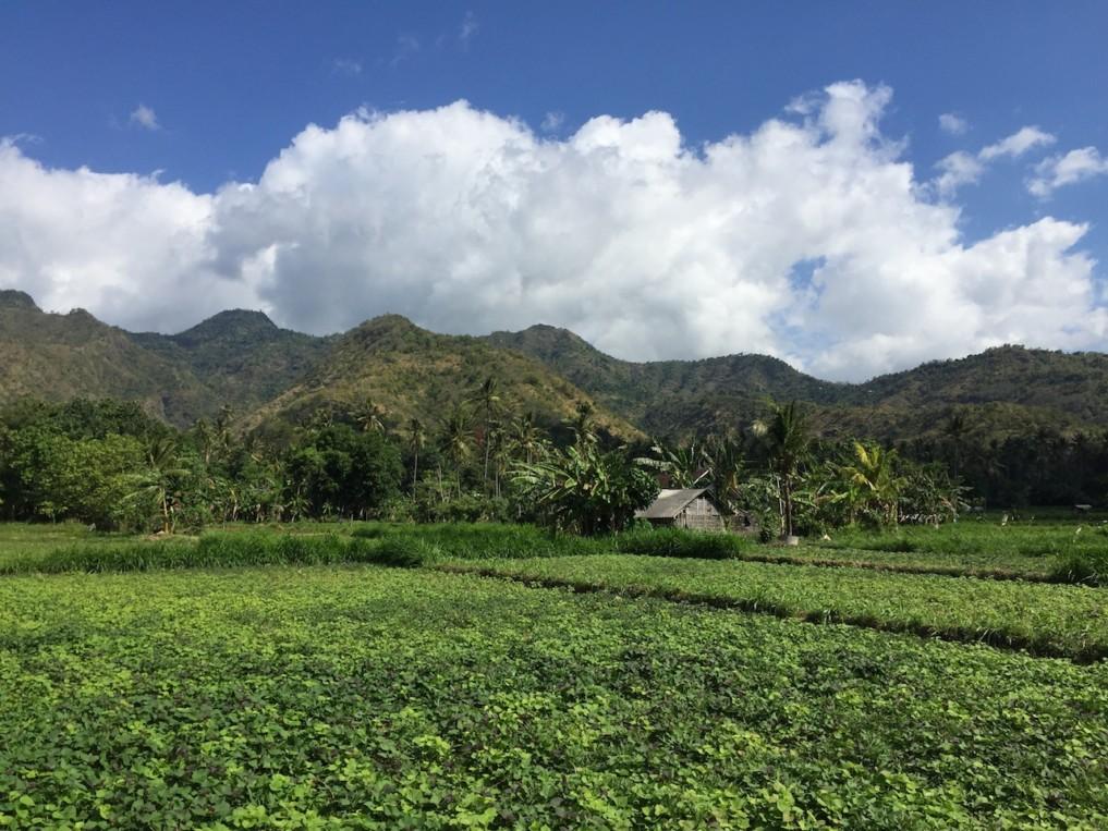 Indonesien-Highlights-Reisfelder