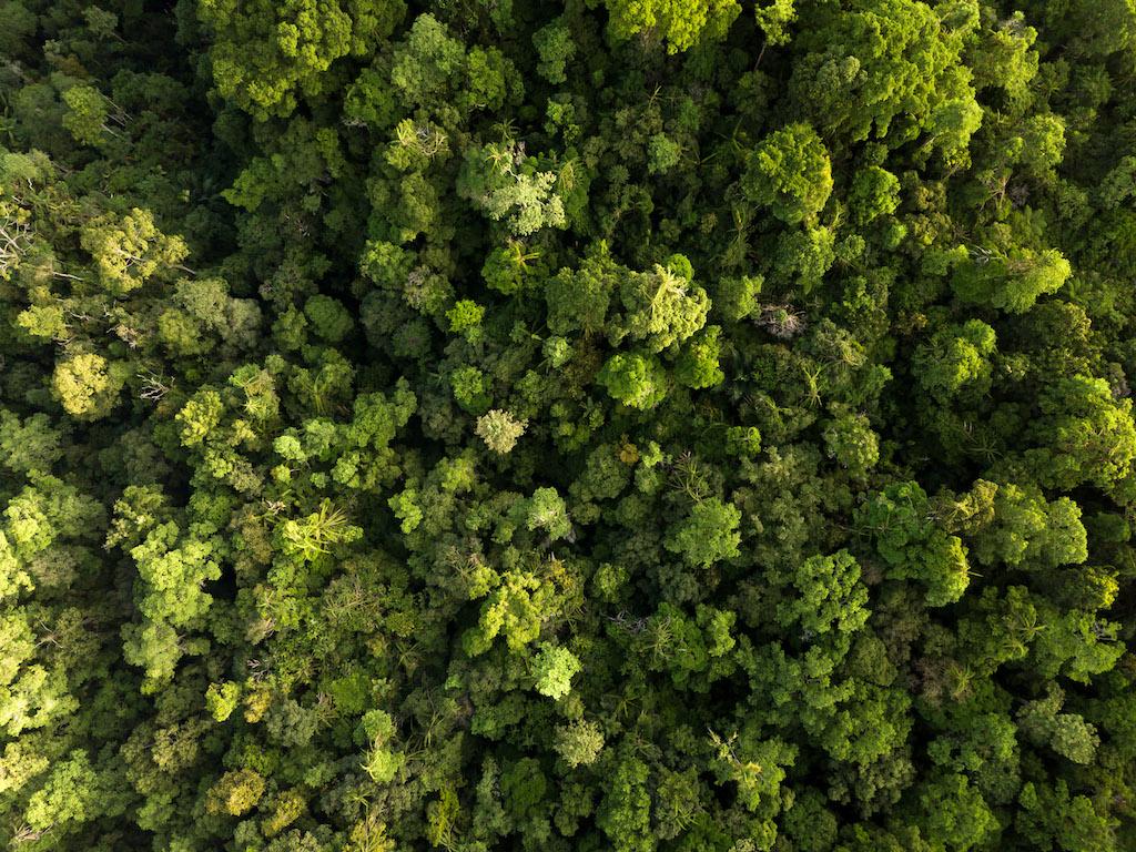 Indonesien-Regenwald