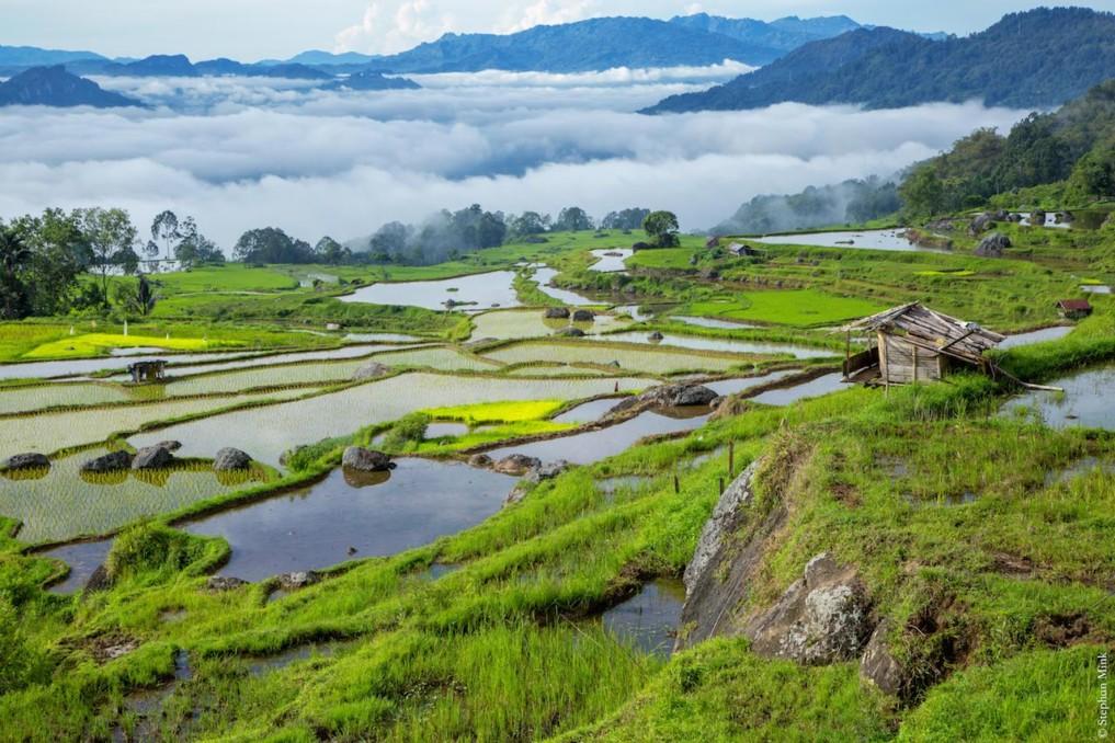Indonesien-Tana-Toraja-4