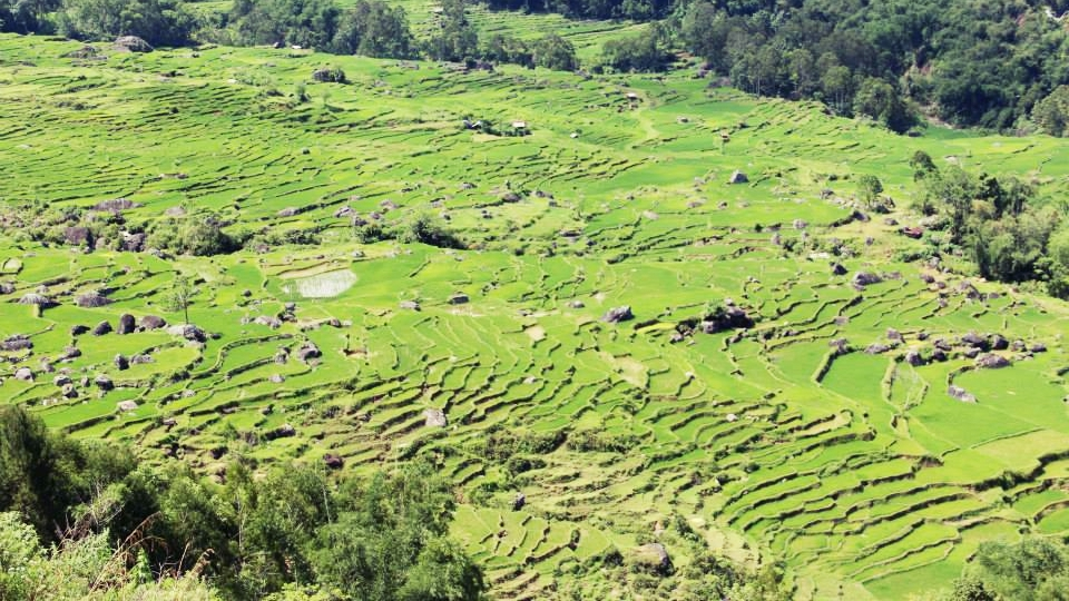 indonesien-urlaub-reisfelder