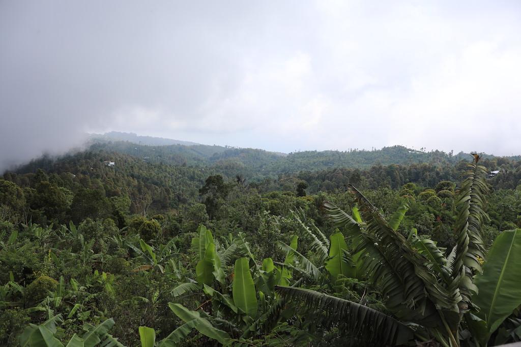 Kaffeeplantage-Luwak-Kaffee