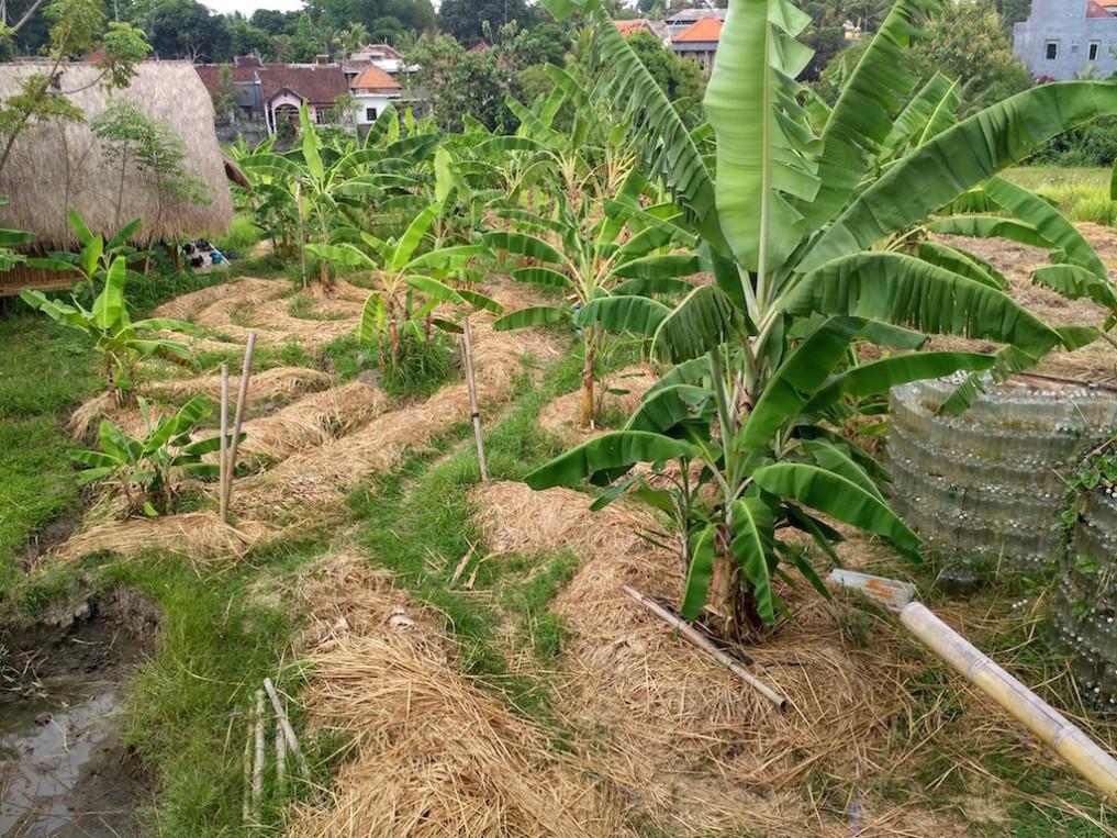 Mukabumi - Nachhaltig Leben Indonesien