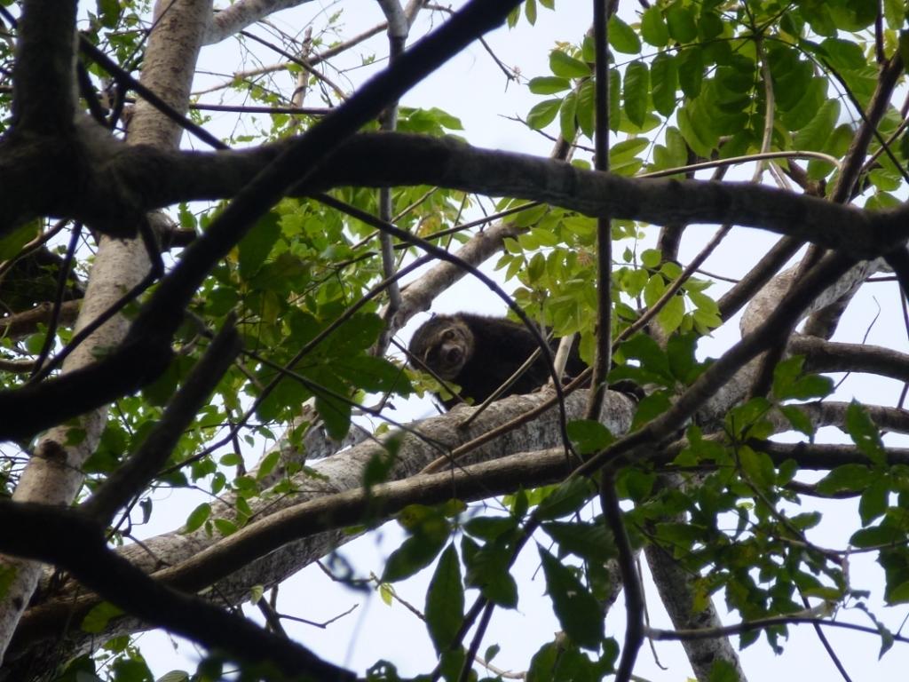 Manembonembo_kuskus-regenwald-indonesien
