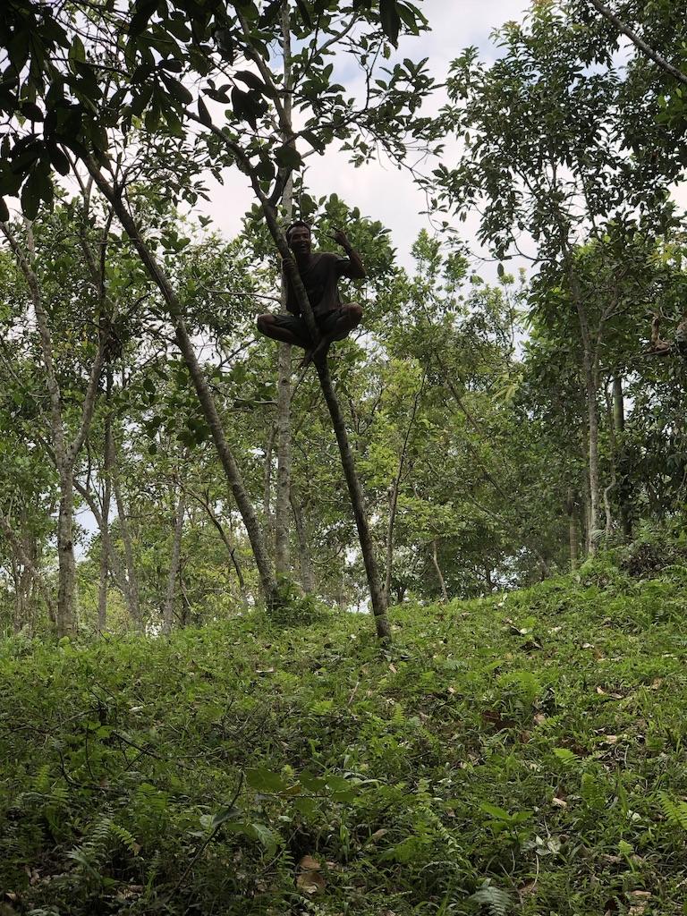 Monkeyforest-Tetebatu