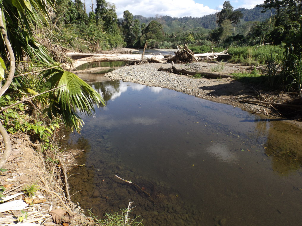 Nantu Forest Landschaft