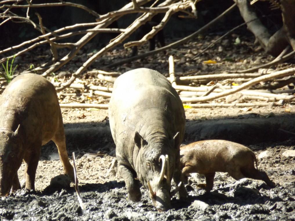 Nantu Forest Neu
