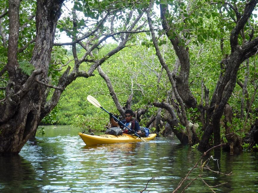 Kayak Sulawesi