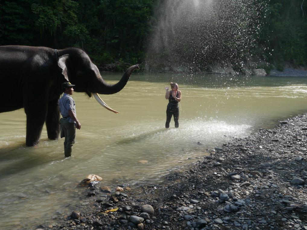 Elefanten reiten in Bukit Lawang