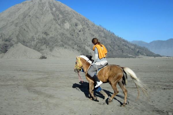 Pferd Indonesien