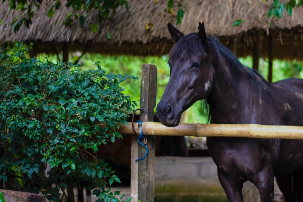 Pferd_Stall