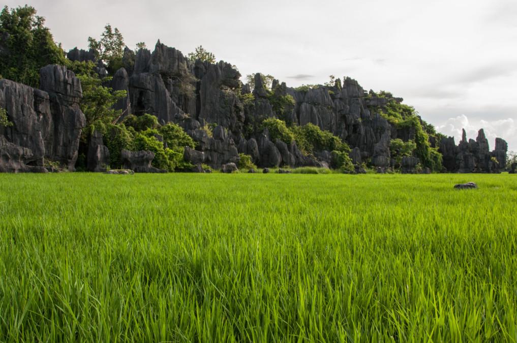 Reisfelder Sulawesi