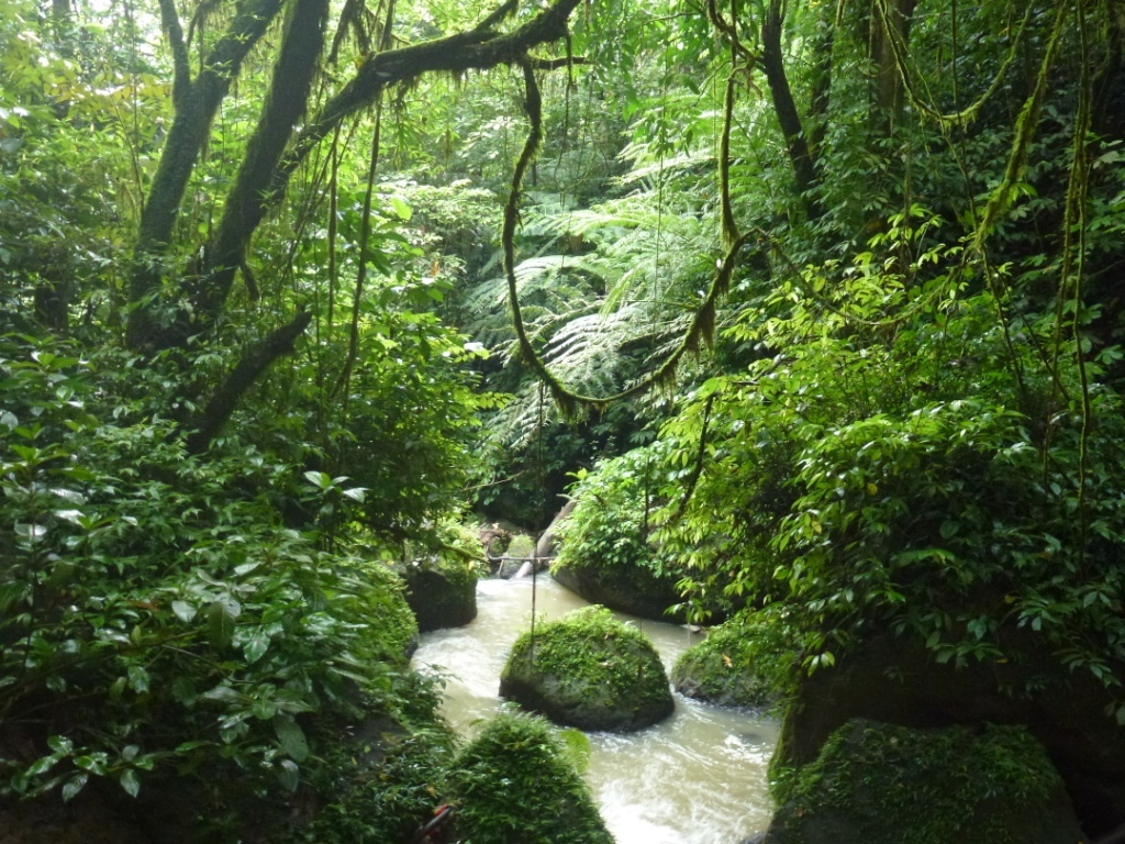 Regenwald-Indonesien-2