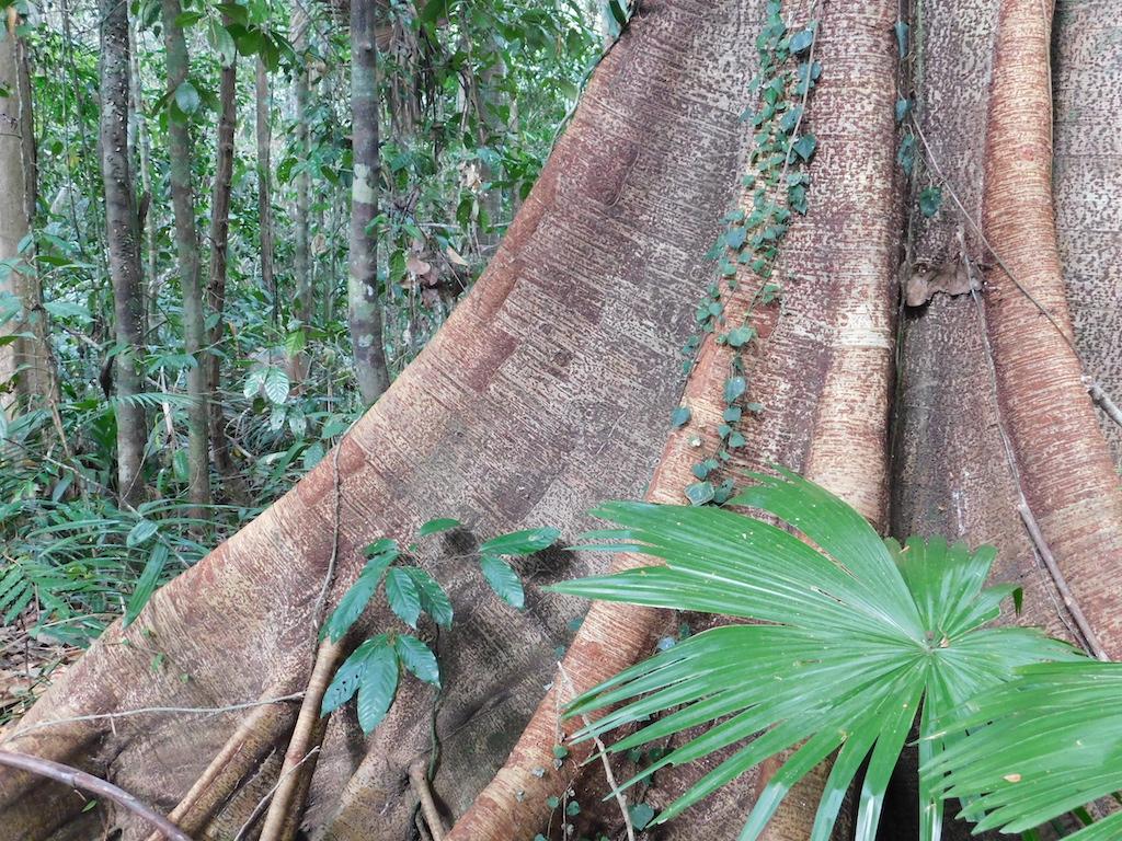 Regenwald-Indonesien-4