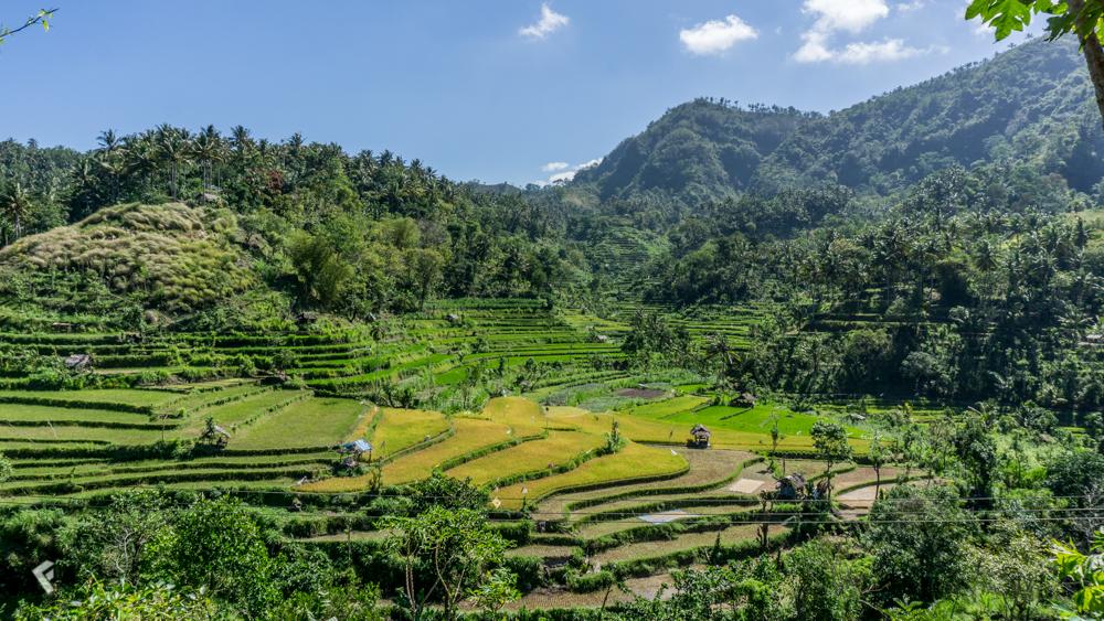 Reisterrassen_Bali