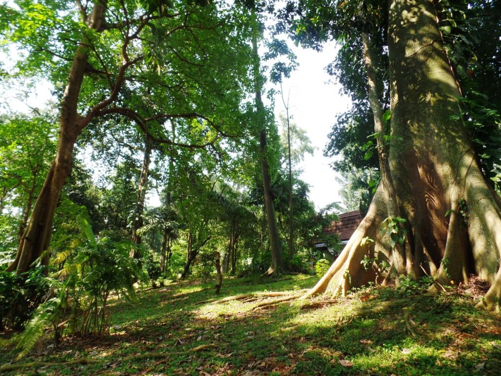 Groß, größer, am Größsten - die uralten Bäume sind wirklich beindruckend