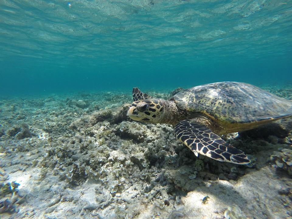 Schildkröte auf Gili Air - Foto von Sandra Fischer