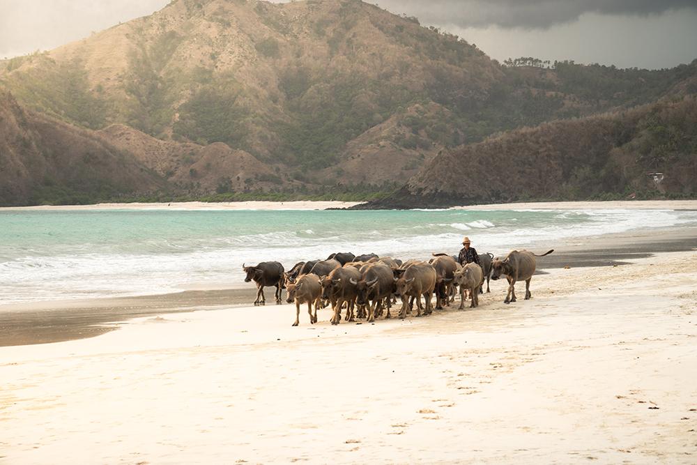 Selong-Belanak-Beach-Lombok-Straende-2