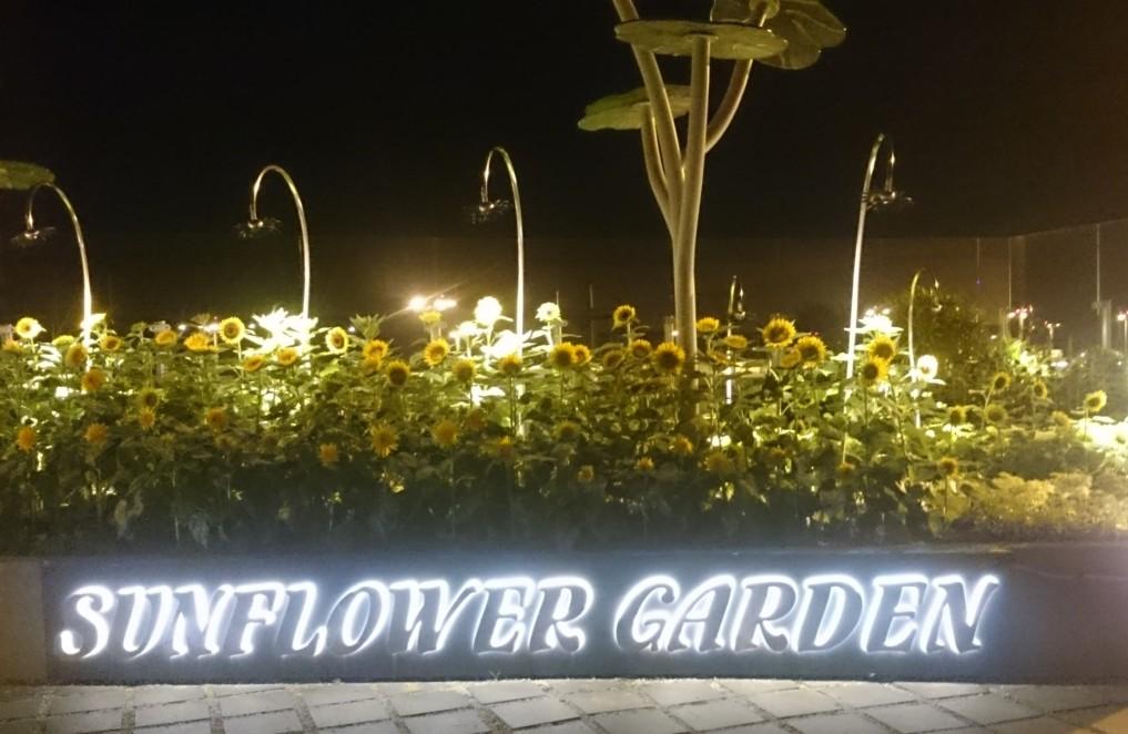 ..sowie im Gartenbreich gibt es eine tolle Blumenpracht zu bestaunen!