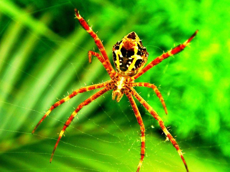 Spider Rancamaya Bogor - Foto von Hans Müller