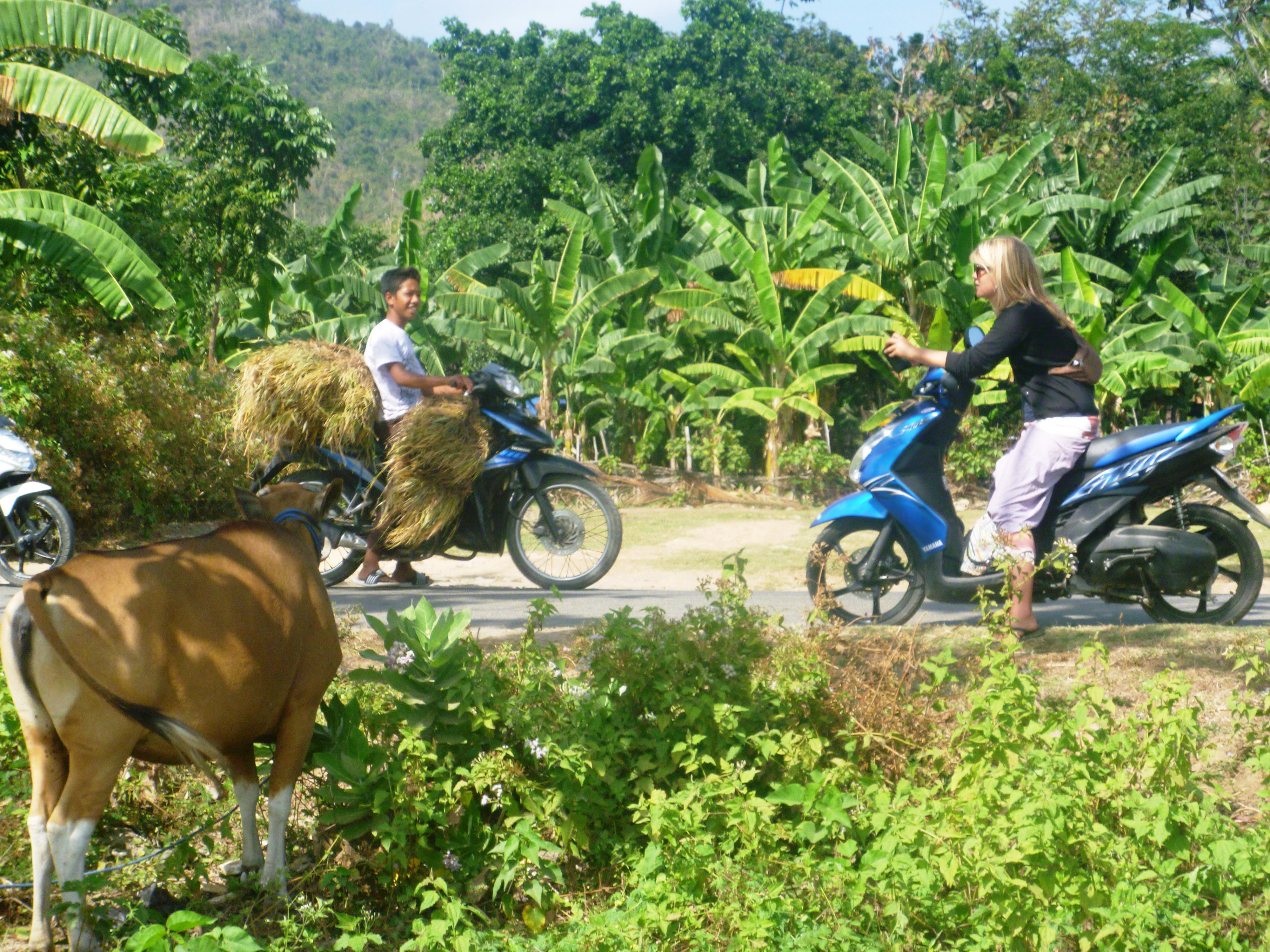 Roller Mieten In Indonesien Alles Rund Ums Roller Fahren Indojunkie