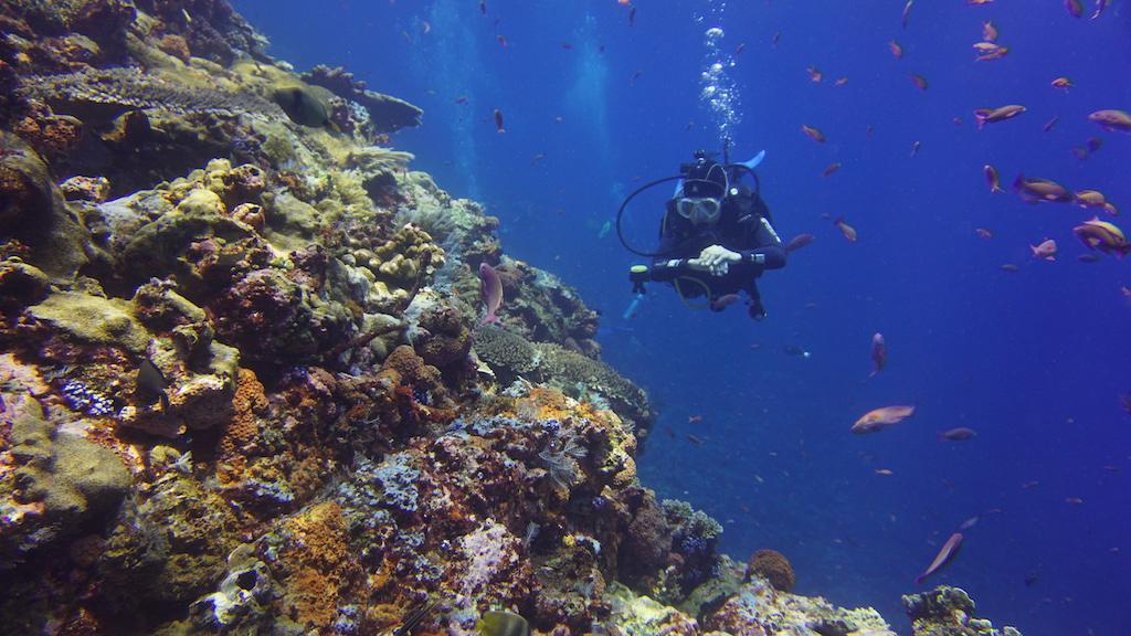 Tauchen-Komodo-Nationalpark-Riff