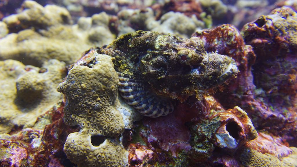 Tauchen-Komodo-Nationalpark-fische