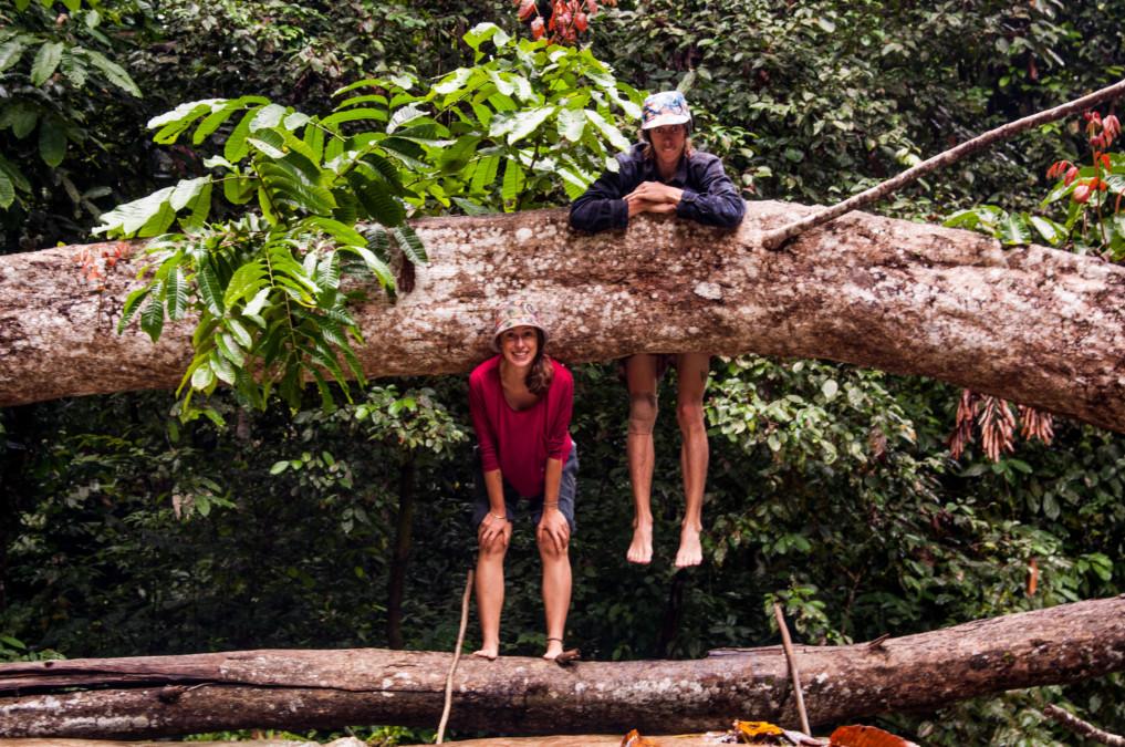 Wanderung durch den Dschungel Indonesiens