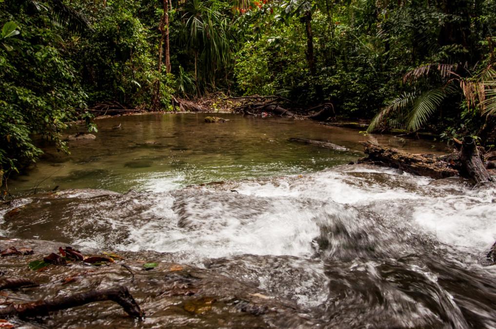 Fluss im Dschungel Indonsiens