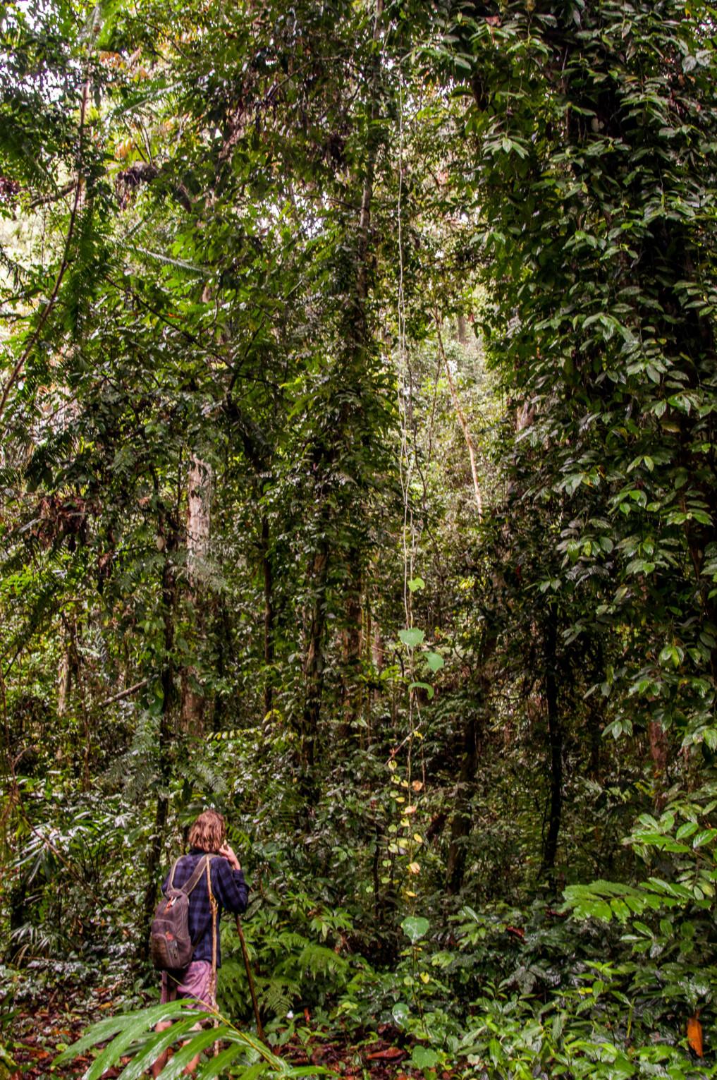 Im Dschungel Indonesiens