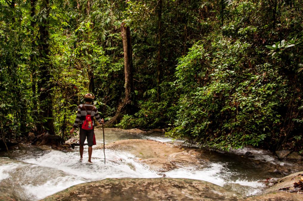 Erkundungstour im Dschungel Indonesiens