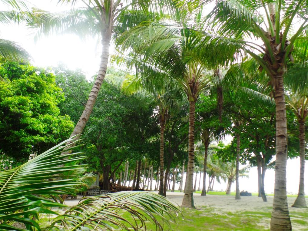 Palmen gibt es sow eit das Auge reicht...