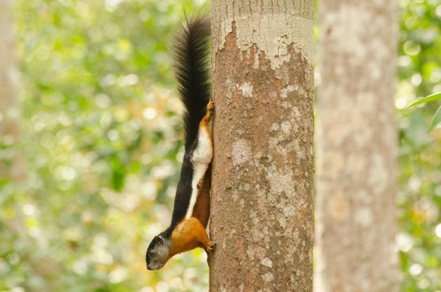 Tierwelt in Tanjung Puting - Foto von Franziska Menschel (Bali Tourguide)
