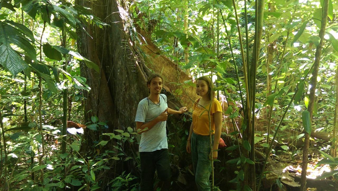 Togean Dschungel