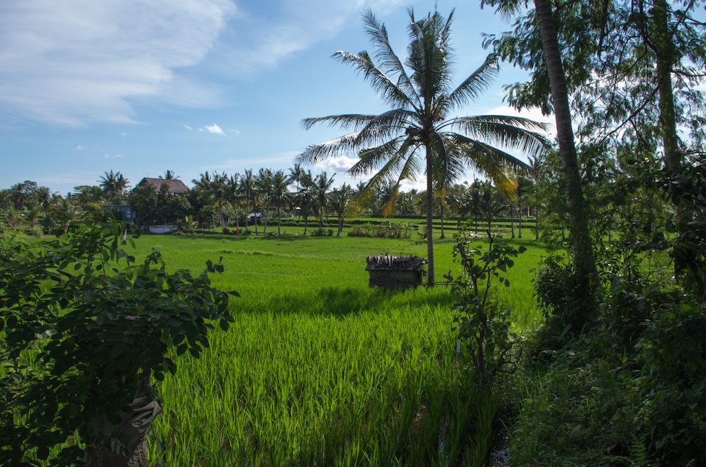 Ubud Bali Insider Tipps