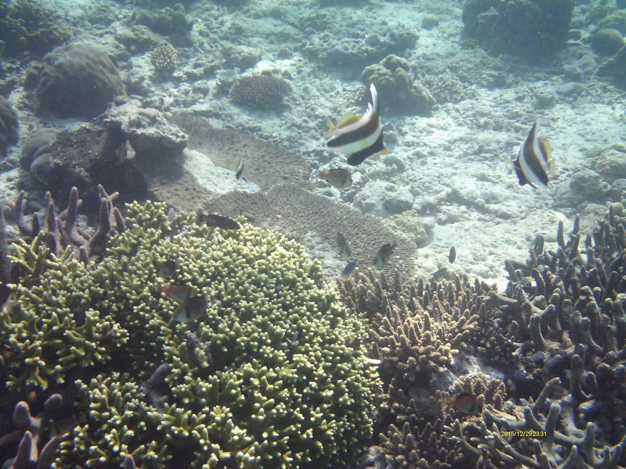 Unterwasser Bira