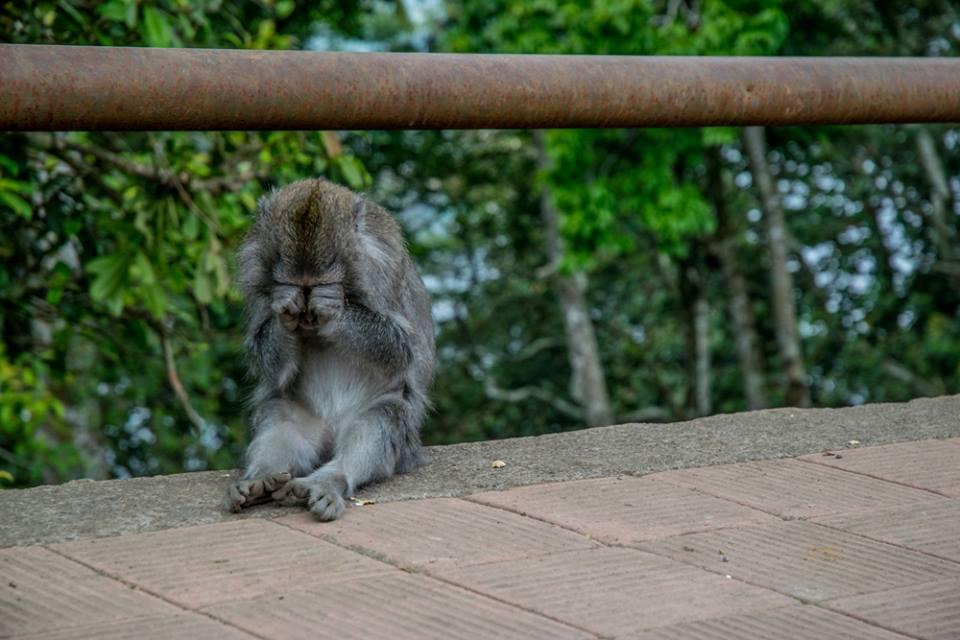 Unterwegs in Bali mit balitourguide.de - Foto von Franzi von Schliekum