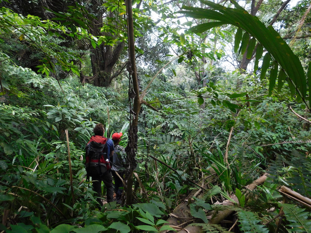 Urwaldtrekking-regenwald-indonesien