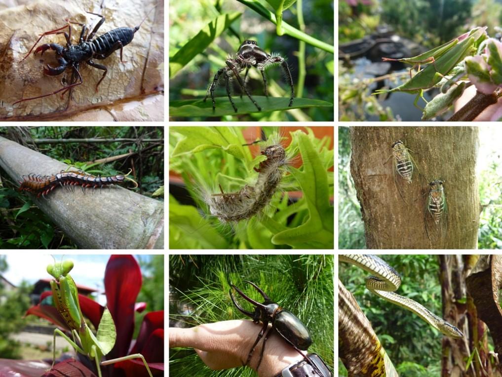 Was kriecht und krabbelt denn da in Indonesien-