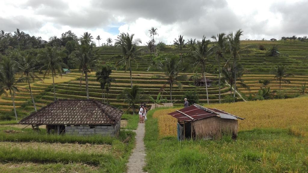 alleine-als-frau-nach-indonesien-_Jati Luwih