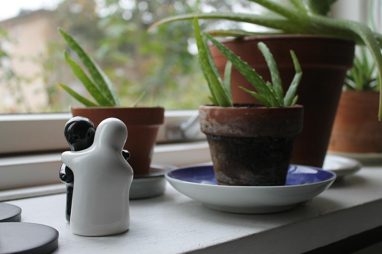 Hol dir eine Aloe Vera Pflanze ins Zimmer!
