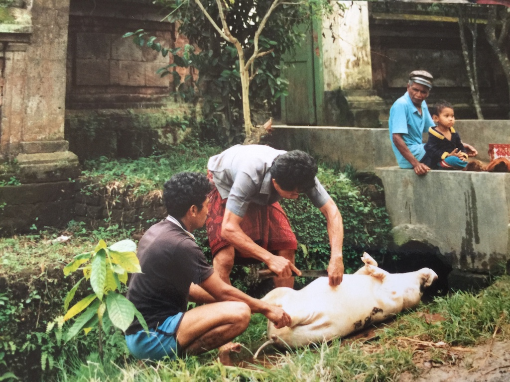 babi-guling