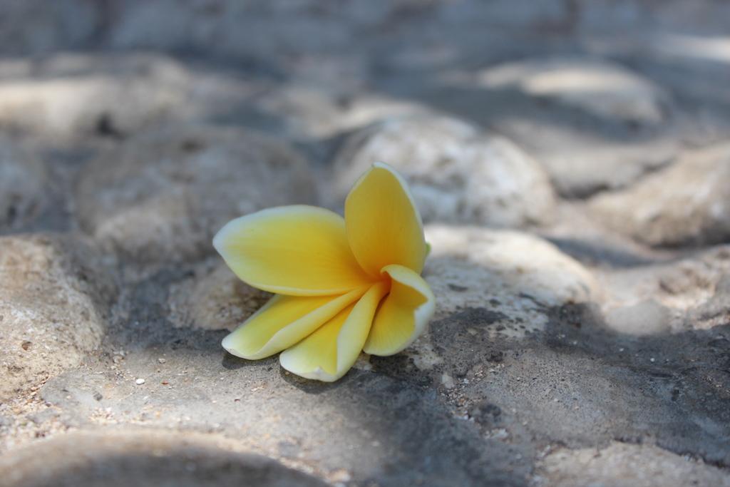 bali-flower-uluwatu