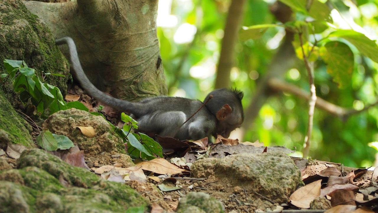 monkey forest ubud interessante orte bali